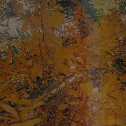 freetoedit flowers orange