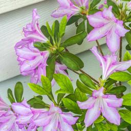 changeofseason spring2019 perennial flowerhead beautifulview