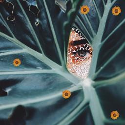 freetoedit leaves eyes green print