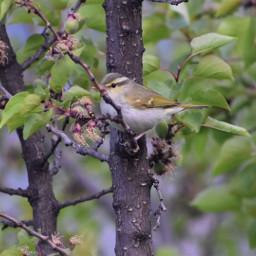 pcbird bird india nature