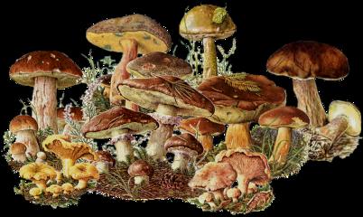 freetoedit mushroom nature outside outdoors