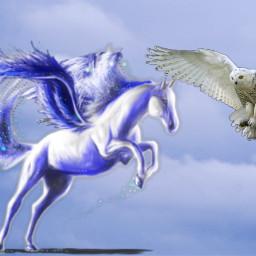 ircflyingswans flyingswans freetoedit
