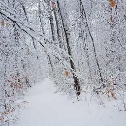 freetoedit wald winter winterforest winterwonderland schnee pcforest