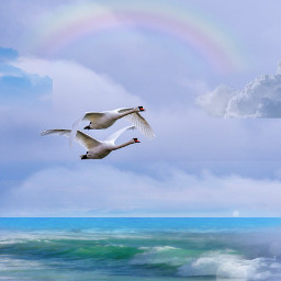 freetoedit ircflyingswans flyingswans