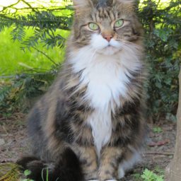 photography tabby feline garden nature