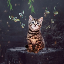 freetoedit cat butterflies