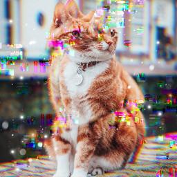 freetoedit art abstract cats interesting