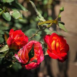 saturdayvibes relaxingday flowers red california