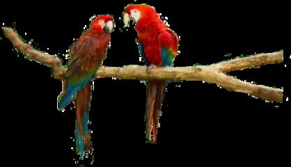parrot bird freetoedit