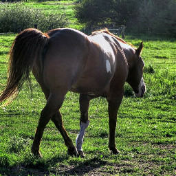 freetoedit horse animals grassfield