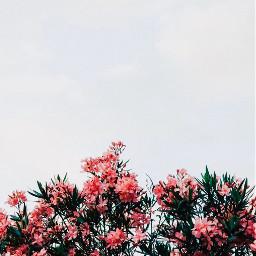 freetoedit aesthetic yessss slay flowers