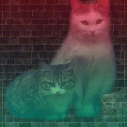 freetoedit vipshoutout cats poparteffect gradienteffect