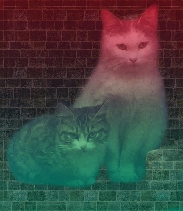 #freetoedit #vipshoutout #cats #poparteffect #gradienteffect #masklight #colorgradient #sketchereffect #adjusttools #hue #colorize #artisticedit #myedit #madewithpicsart