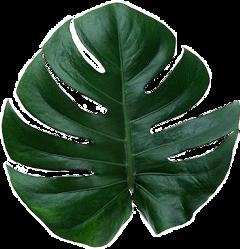 leaf jungle aesthetic freetoedit