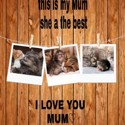 mum cats family polaroid muttertag freetoedit