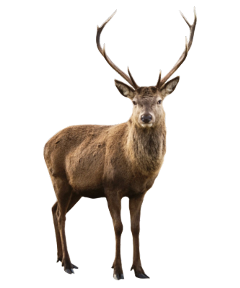 deer elk reindeer animal animals ftestickers freetoedit