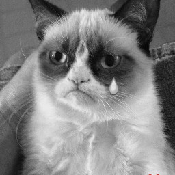 grumpycat freetoedit grumpy