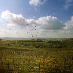 countryside piemonte italy vineyard campagna