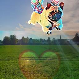 ircflyingpug flyingpug freetoedit