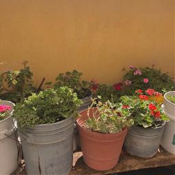 pot plants flowers mexico flowerpots