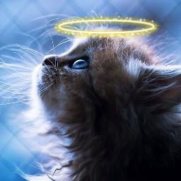 freetoedit love cat kitten kittens srchalo