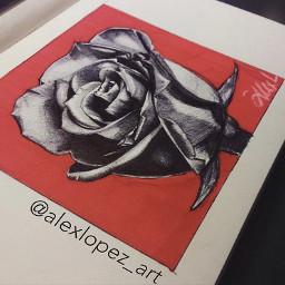 blackrose rose roses rosas rosanegra