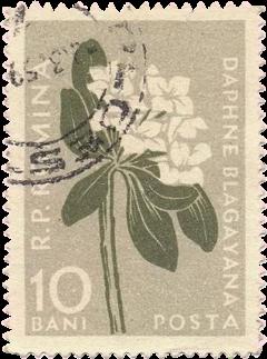 post postcard mark flower beige freetoedit