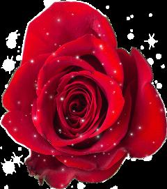 scroses roses freetoedit