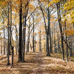 tree trees nature background backgrounds freetoedit