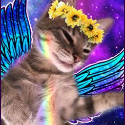freetoedit galaxy sunflowercrown galaxywings cutecat