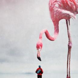 flamingo bird birb bigbird biganimal freetoedit