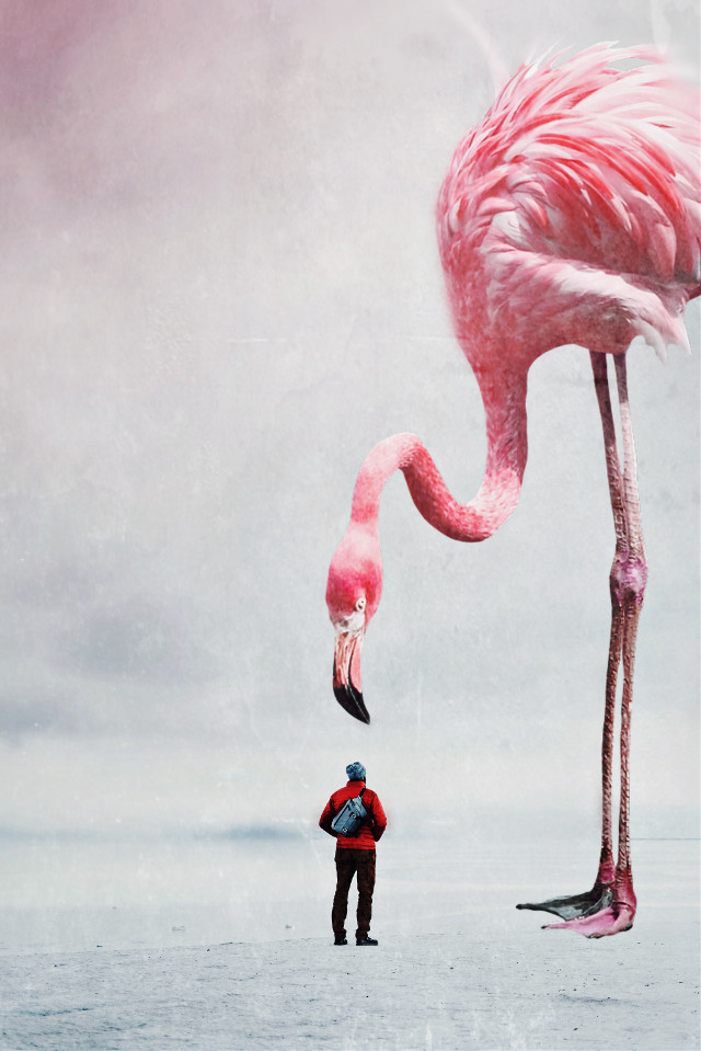 Meeting with Mr Flamingo #flamingo #bird #birb #bigbird #biganimal #surreal #surrealism #fantasy #freetoedit