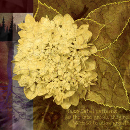 freetoedit hydrangea treeoflife roots growth scienceistruth