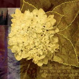 freetoedit hydrangea treeoflife roots growth scienceistruth