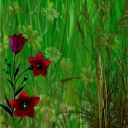 freetoedit background wiese gras grassland