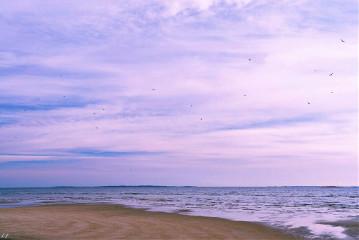 #catcuratedocean,#ocean