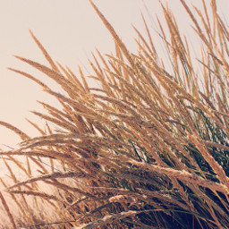 sunnysunday nature beachvibes dunes wildplants freetoedit