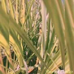 interesting nature photography grassy beautifull freetoedit