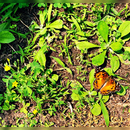 nature butterfly green spring summer freetoedit