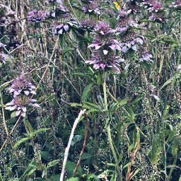 summer purple wildflowers