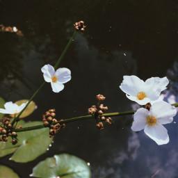 flowers photostory beauty nature getoutside freetoedit