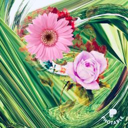 freetoedit flower photography nature rosepink