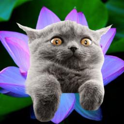 srcfluffycat fluffycat freetoedit
