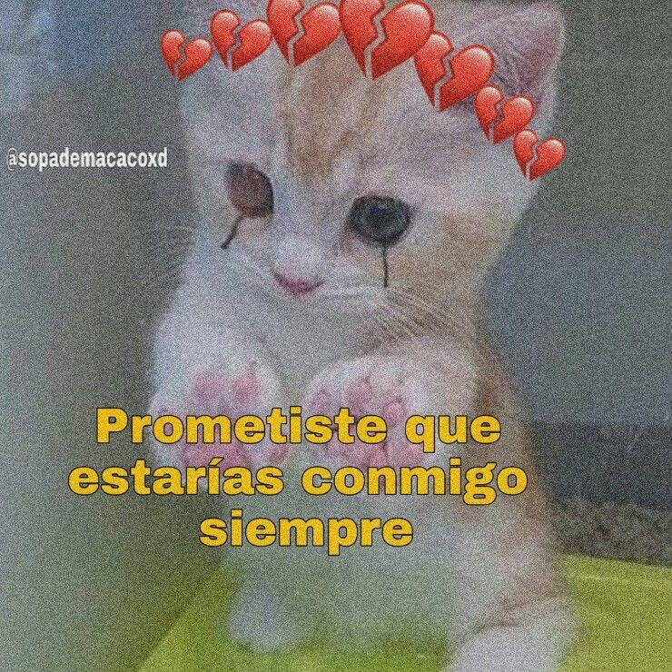 Gato Aesthetic Frases Sadcat Brokenheartcrown Free