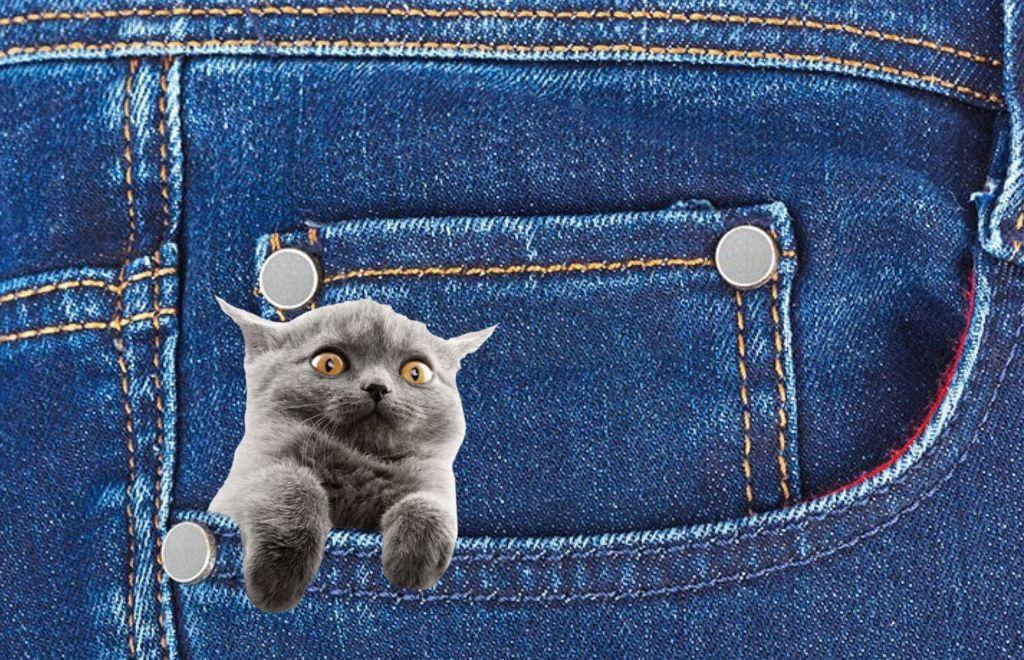#freetoedit #cat #pocket #cute
