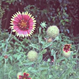 nature wildflowers wildlife
