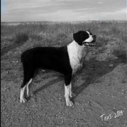 historiasdes_veladas_de_mi_dia_a_dia dogs perro dogsofpicsart animals