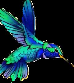 birds colors woodpecker bordy crop freetoedit