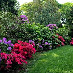 freetoedit blooming flowering shrubs lawn