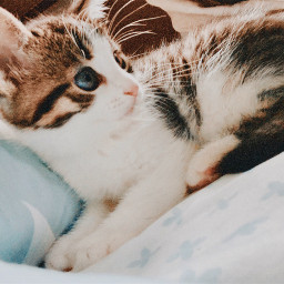 kitty kitten cat cute nature freetoedit